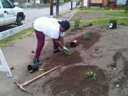 SRSC working to beautify our street