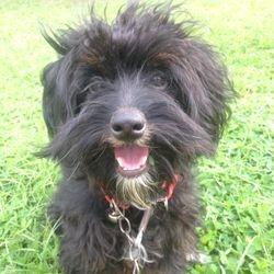 My Pet dog Archie :)