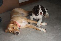 Penny & Tripp
