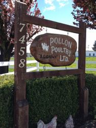 Bolon's Chicken Farm
