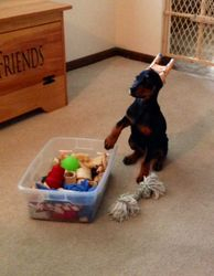 Raina's Toy Box