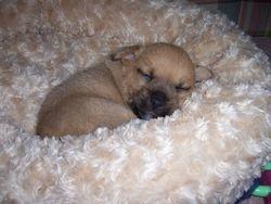 Smidge's pup