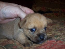 Tilloo's pup