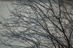 Hoar frost.