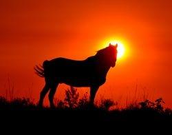 Stallion at sunrise.