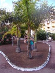 Palma na palmi raste :)
