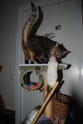 Popcorn och katten Sessan