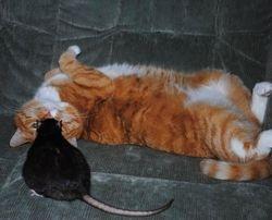 Katten Molly och Brum