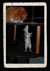Katten Molly och Prillan