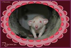 Rose-Nose Snugglepuss