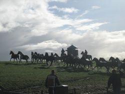De paarden hebben vaste grond onder de hoeven