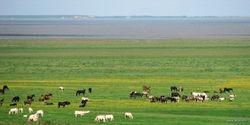 it Noarderleech 2007, paarden, koeien, schapen