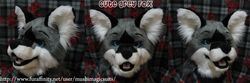 Grey Fox Head: 2011