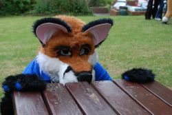 Freckles The Fox