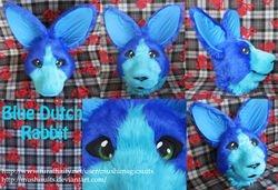 Blue Dutch Rabbit Partial: 2011