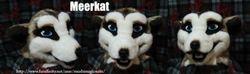 Meerkat: 2011