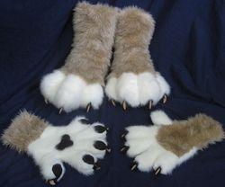 Lion paws: 2011