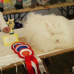 Arundel Stud winning BiS at the South of England Show in 2006