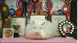 Supreme Champion Willowcot White Pomeroy