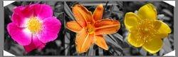 Fleurs de Mont Cerisy ColourOut