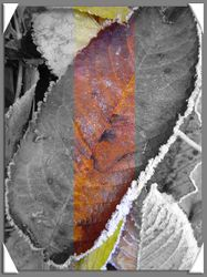 Frosty Leaves ColourOut