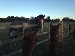 Rocco meets Hamish and Denzil