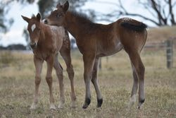 Ultimate Seduction 2013 filly