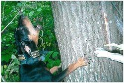 Lock Down Tree Dog