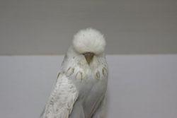 Cinn Grey spangle Hen