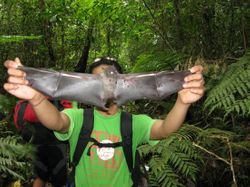 Who Shot This Bat in the Protected Area?