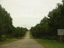 Pinetree Hi-way in Salvador Benedicto