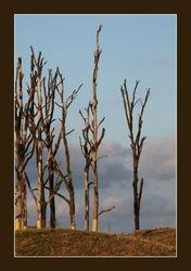 Bomen als kunst in het park