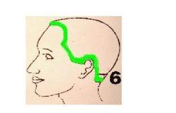 Cum se aplica peruca