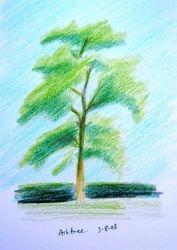 ash tree (august 2008)
