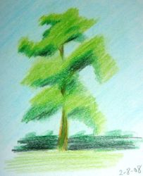 dynamic green energy of trees (august 2008)