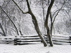Rail Fence in Snow