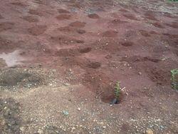 PIED members tree planting excercise