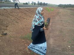 PIED members tree planting exercise