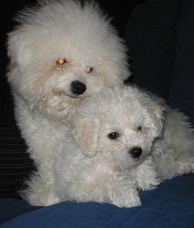 Lola ja Milli