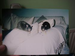 Oscar and Trent - pet shop.