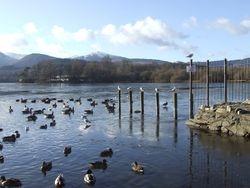 Wild Fowl Enjoying the Day on Derwent Water