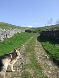 Heading towards the gate to open moor