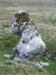 Harry Horse Stone