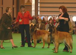 9th March, 2007 Crufts