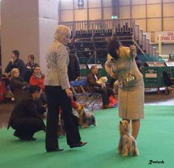 Crufts March 2009