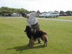 Champion Dog Tervueren