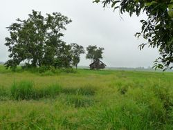 Sinbo marshland.