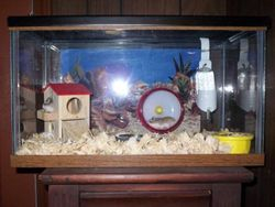 Home to Chibi and Telly (aquarium, read description)