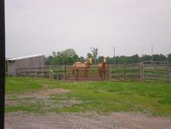 Our noisy horses