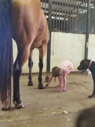 Kenna Belle; helping to take care of our horses